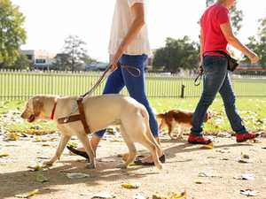 Danger for guide dogs and handlers