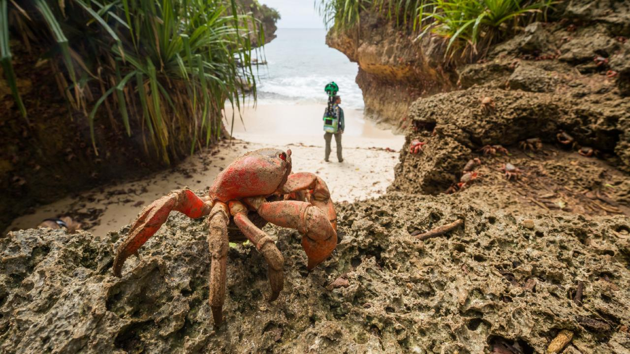 Google Australia teamed with Parks Australia to capture the annual migration of the Christmas Island red crabs.