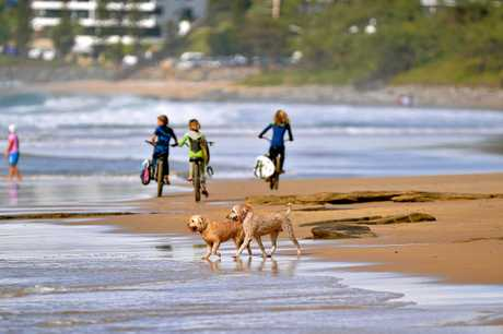 Dogs play on the beach at Currimundi.