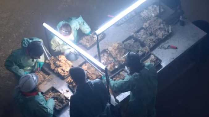 Picture: Channel 4 / Fatberg Autopsy: Secrets of the Sewers