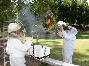 VIDEO: 'Military work' removes bee hive in time for wedding