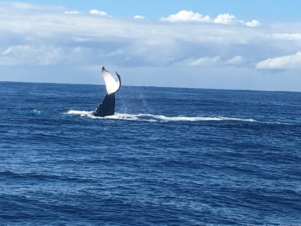 Whales have been sighted at Fingal Head, some are asking for shark nets to be removed.