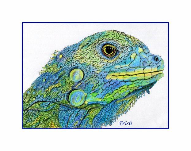 Trish Jackson loves to draw lizards, reptiles and birds.