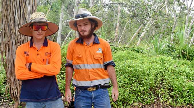 Rockhampton's Calum Boggs and Brendon Heaslip are part of the Work for the Dole program at Neato which saw them pull metres of weeds by hand in Yeppoon, in partnership with Capricornia Catchments.