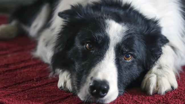 Overtoun Bridge in Scotland has seen more than 50 dogs jump to their deaths, and nobody can figure out why. Picture: Supplied