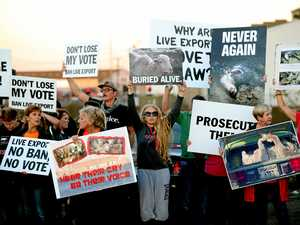 Abolish the live animal export industry