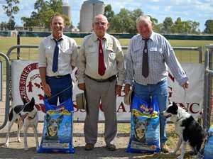 Dalby to host Australian Supreme Sheep Dog Trials