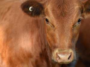 Roadside grazing levy could be waived in near future