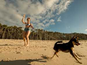 Straddie bid to ban cats and dogs