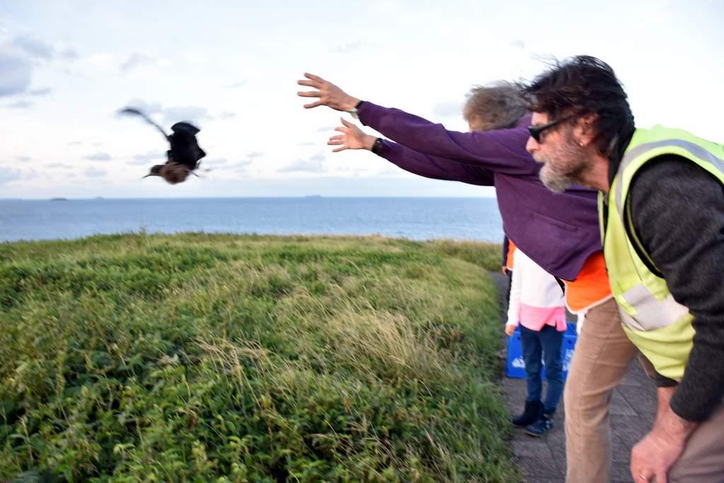 WIRES volunteers returning wayward juvenile muttonbirds to Muttonbird Island at Coffs Harbour.