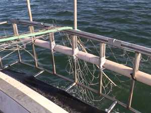 Shark nets to be removed.