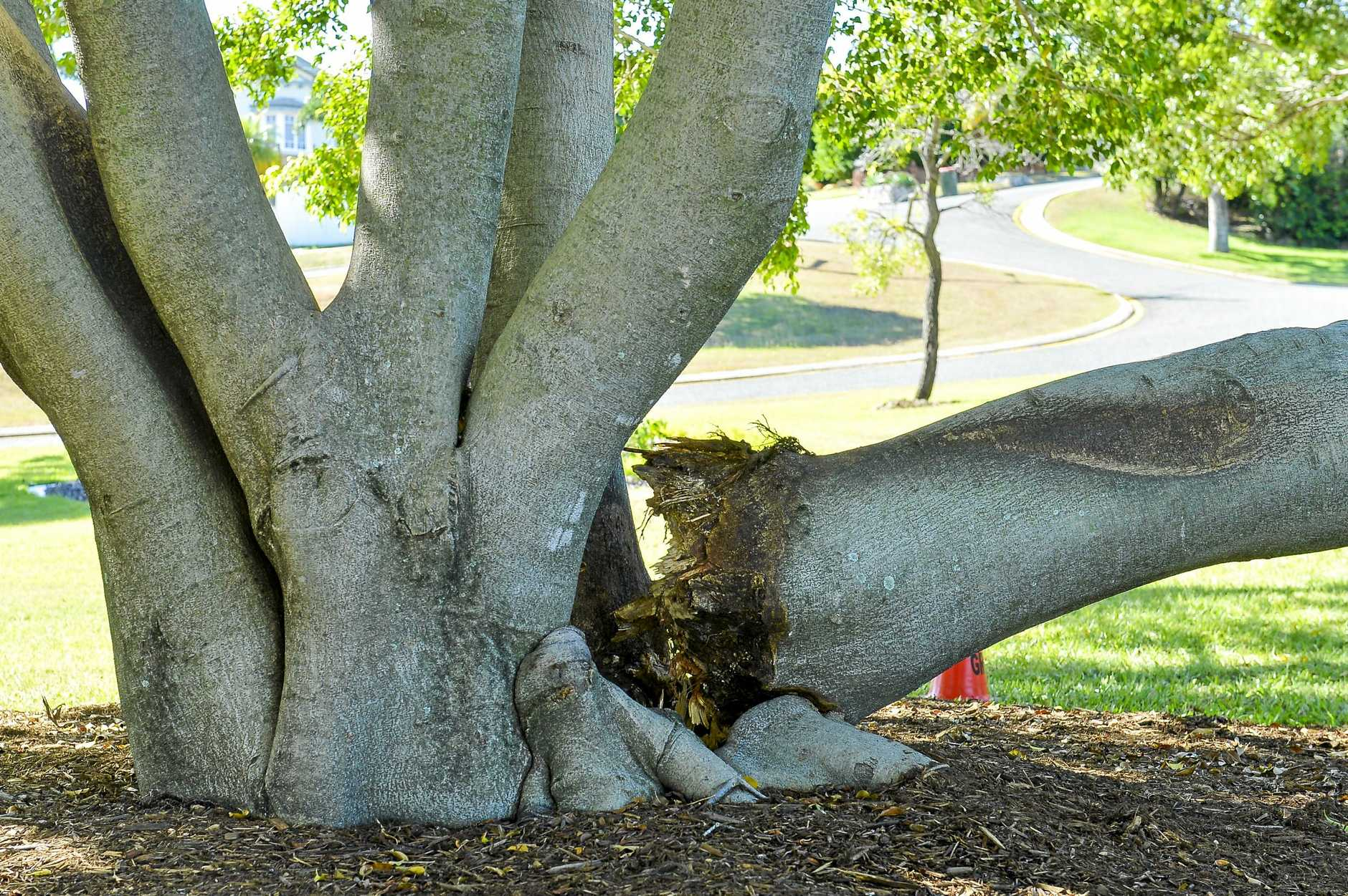 A fallen tree branch in Gladstone's Central Park was a popular sitting place for children watching the recent Anzac Day ceremonies.