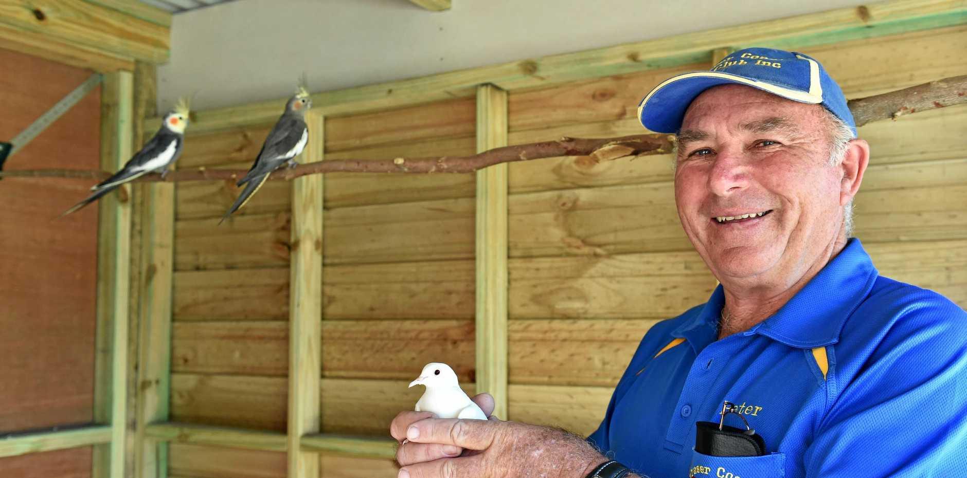 BIRD TALK: Passionate bird breeder Peter Bugge started the popular Fraser Coast Bird Club 10 years ago.