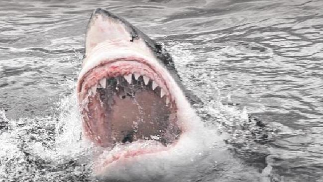 A man has told what it's like to be attacked by a shark.