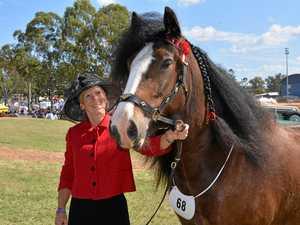 Gatton heavy horse show hard to miss