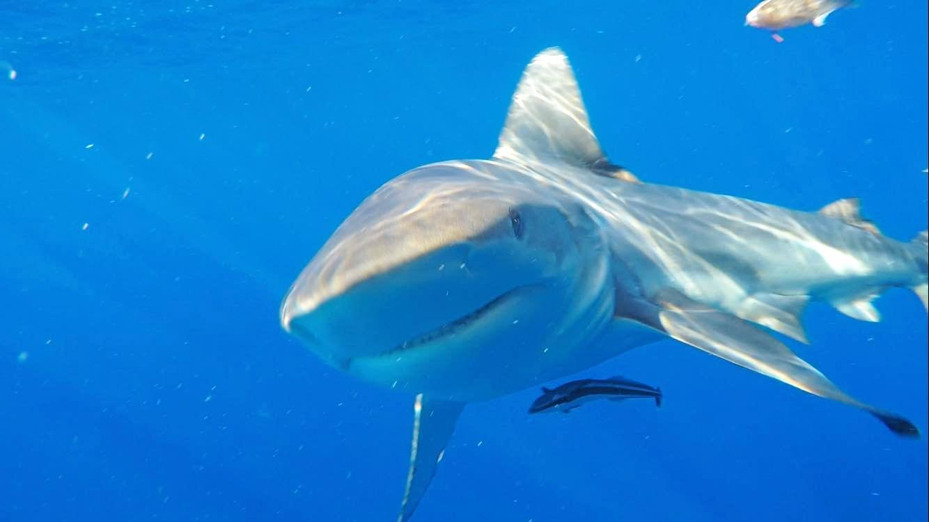 UP CLOSE: Fisherman Ben McJannett has taken these images on his trawler just off Mooloolaba.Photo Contributed