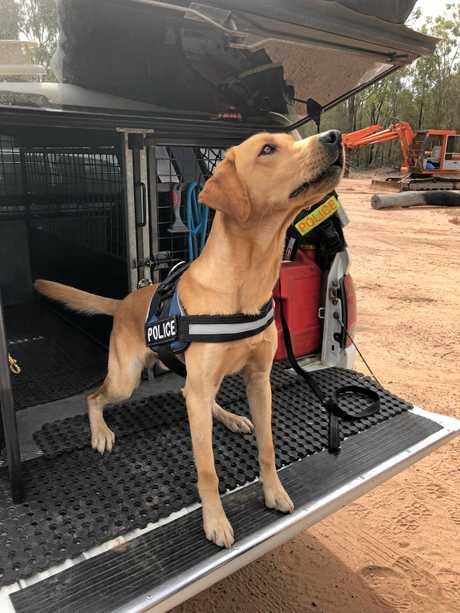 HELPER: Warwick police dog Ice helped uncover a massive stash of drugs and firearms throughout Warwick and the Southern Downs at the weekend.