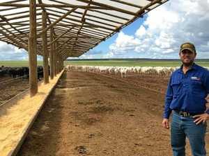Sarina farmer rapidly expanding cattle empire