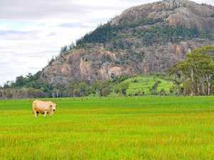 Central Queensland farm values rise, but sales limited