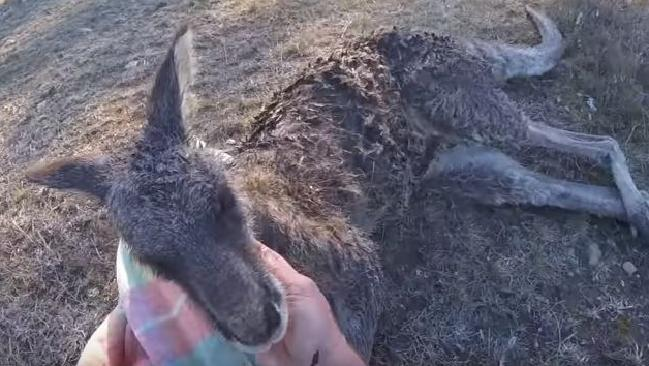 A NSW farmer used only a stick and his two hands to save a kangaroo from certain death.