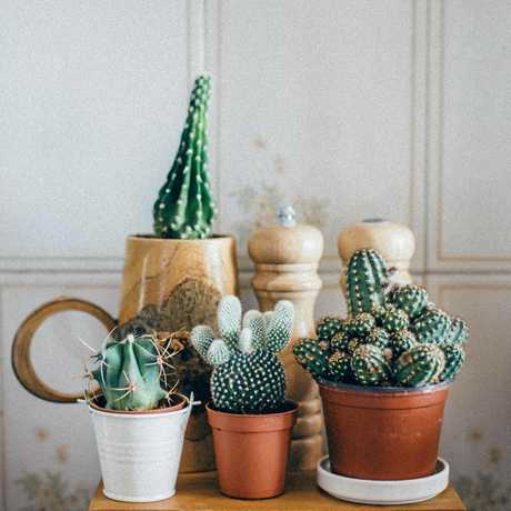 Hard-to-kill cacti and succulents would be a great first plant.