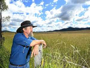 Fears for Gympie's beef industry as grass plague worsens