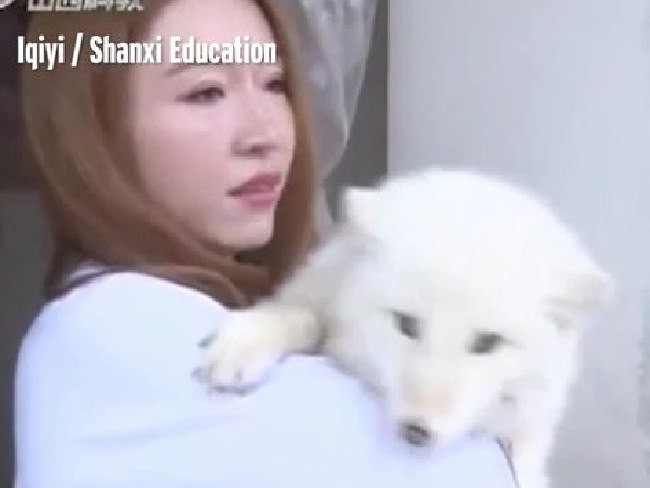 Ms Wang paid more than $AU250 for what she thought as a Japanese Spitz puppy. Picture: Shanxi Network Television