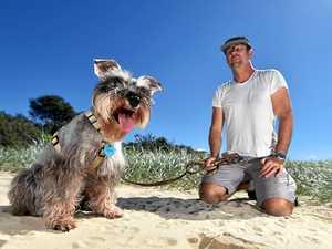 Family pet maimed by fox trap hidden in sand