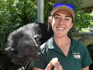 Coast zoo to celebrate animal that smells like popcorn