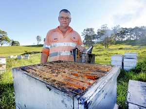 Beekeeper feeling the sting after honey theft