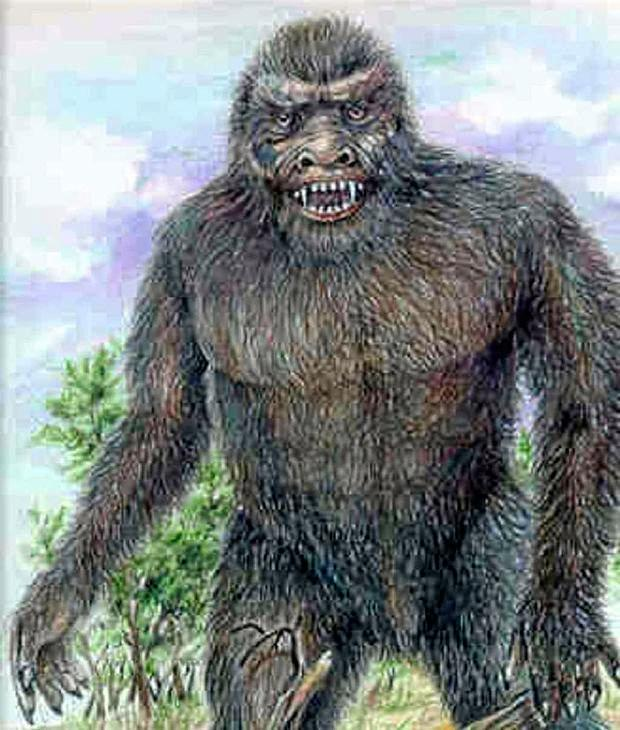 The Yowie remains an elusive creature in the Ipswich region. Illustrations by Bill Rasmussen