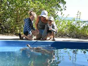 Rare chance to pat a turtle at Quoin Island's turtle tour