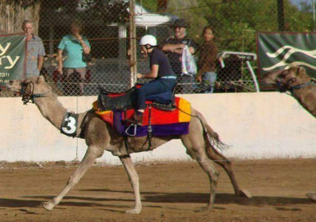 Camel races at the Ipswich show are always popular