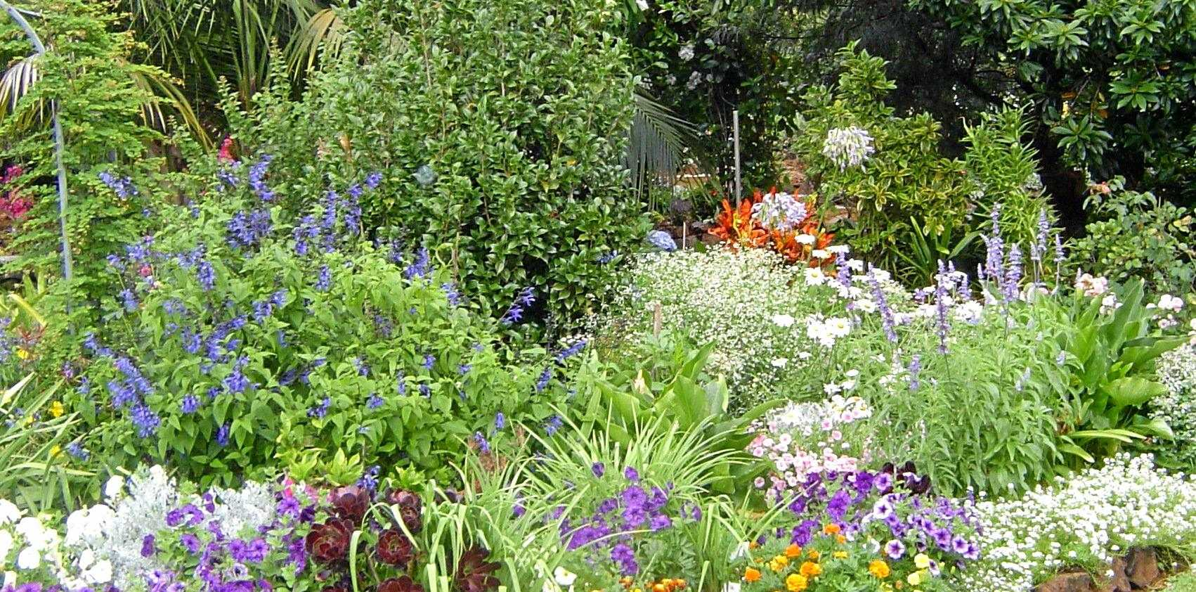 We need at least four varieties in flower at any time to attract bees to a garden.
