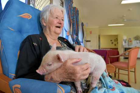 April Lee the piglet makes a surprise visit to the residents of TriCare Kawana Waters Aged Care Residence. The animals from Old MacDonald's Farm provide therapy and positive memories to the elderly.Jocelyn Snape gets a cuddle from April Lee
