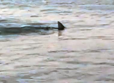 Shark spotted at Orchid Beach, Fraser Island.