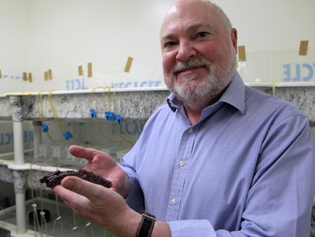David Glanzman holding a marine snail. Picture: Christelle Snow/UCLA