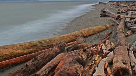 A windswept beach on the Salish Sea.