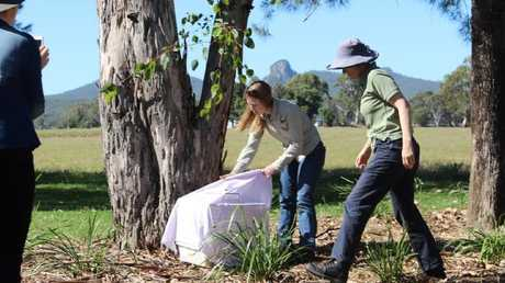 Sheree the koala was released back into bushland on Friday.