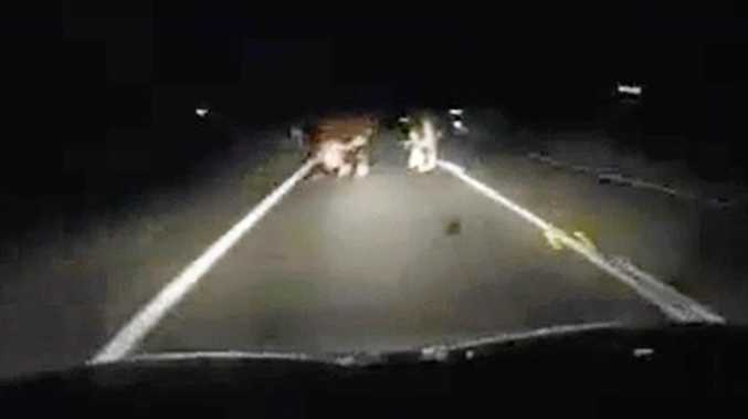 FILE PHOTO: A male patient with seatbelt injuries was transported to Gympie Hospital stable after a vehicle came into contact with a cow on the Wide Bay Highway at 8.51pm.