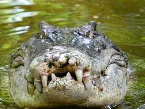 Have your say on controversial crocodile culling plan