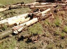 The logs from Monday's truck rollover on Gladstone Monto Rd may be cleared up but questions remain.