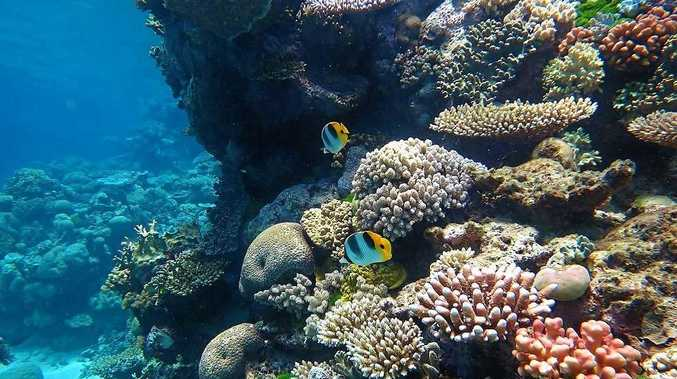 84 per cent of respondents said the overall state of the Great Barrier reef was declining.