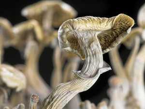 'No evidence' man's mushroom stash was magic
