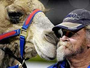 'Big donkeys': Camel races always a hit at the Show