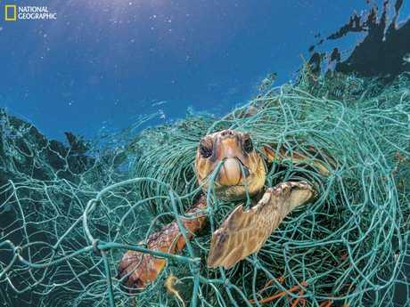 海洋中的塑料已成为野生动物的主要威胁。 图片:Jordi Chias