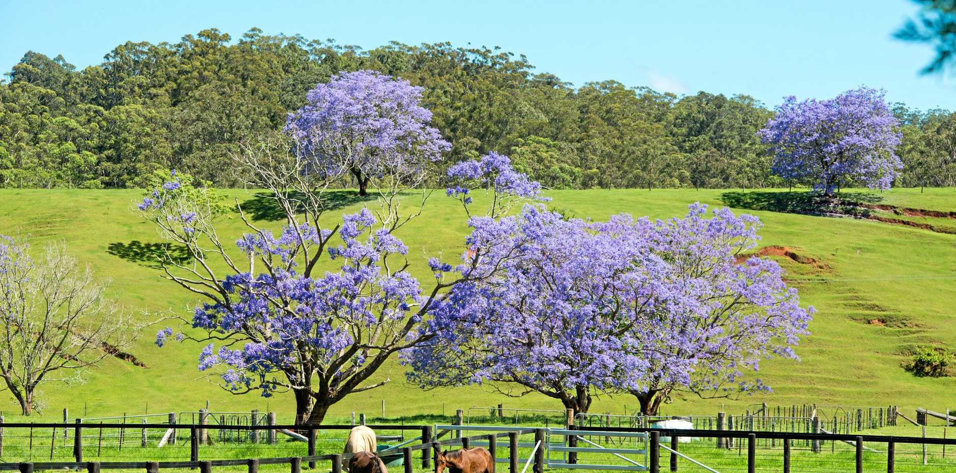 PICTURE PERFECT: Bellingen Shire is blessed with some of the most picturesque land in the country.