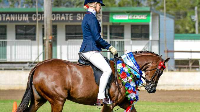 300 horses for elite horse hack competition