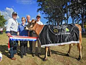 GYMPIE SHOW: 'Extra special' win for dairy champ