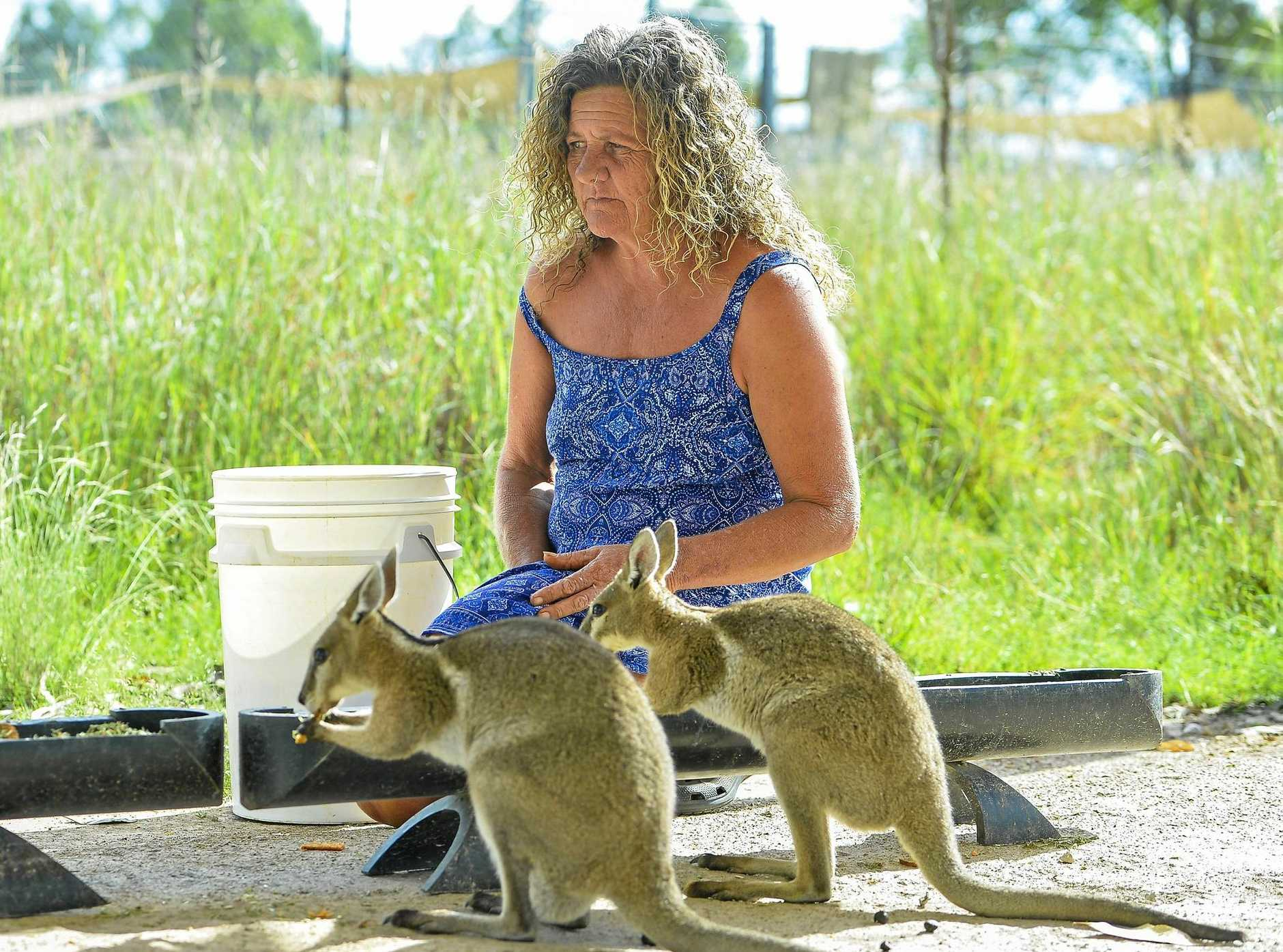 SAFE HAVEN: Tina Janssen cares for over 100 native animals at her wildlife sanctuary in Mount Larcom.